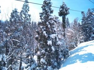 積雪した木々