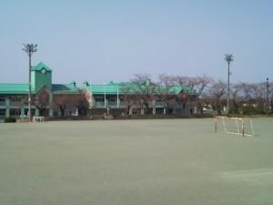 糸中校舎側の桜