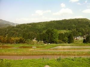 裾野の田んぼ